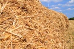 Золотое поле стерни соломы в осени Стоковые Фото
