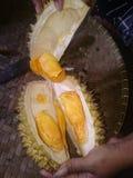 Золотой дуриан король плодоовощ стоковое изображение rf