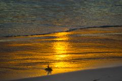 Золотой заход солнца на береге океана Солнце отражено в прибрежной волне Стоковое Фото