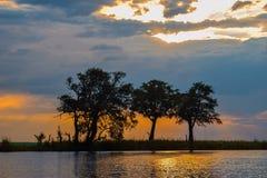 Золотой заход солнца на реке Chobe, Ботсване стоковое фото rf