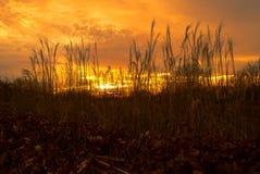 Золотой заход солнца через травы на Wisley, Суррей Стоковое Фото