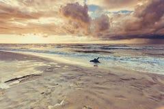 Золотой корень захода солнца и дерева на пляже Стоковые Фото