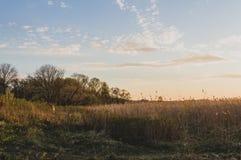 Золотой ландшафт парка весны часа, парк Aleksandria, Санкт-Петербург стоковое фото