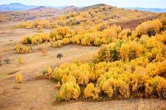 Золотой лес цвета на степи Стоковая Фотография