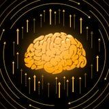 Золотой мозг, умная иллюстрация разума, вектор иллюстрация штока