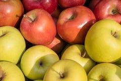 Золотой - очень вкусные и торжественные яблоки стоковые фотографии rf