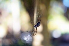 Золотой паук шара в сети паука Стоковое Изображение RF