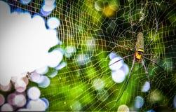 Золотой паук Шар-ткача стоковое изображение rf