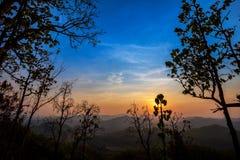 Золотой светлый блеск на дереве во время захода солнца в переднем плане и голубом/оранжевом небе разрывал в предпосылке Стоковое Изображение RF