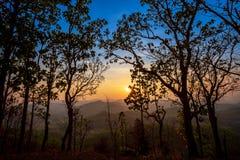 Золотой светлый блеск на дереве во время захода солнца в переднем плане и голубом/оранжевом небе разрывал в предпосылке Стоковые Изображения RF