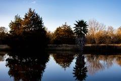 Золотой силуэт дерева озера час стоковое изображение rf