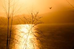 Золотой сумрак на лагуне Saquarema стоковая фотография