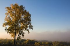 Золотой тополь стоит на холме в утре осени утра стоковая фотография rf