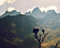 Золотой час в горах стоковая фотография rf