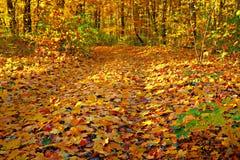 золото осени Стоковая Фотография RF