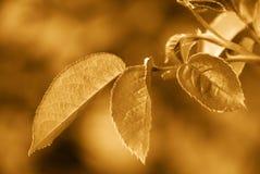 золото осени Стоковые Изображения RF