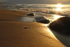 золото пляжа Стоковые Фото
