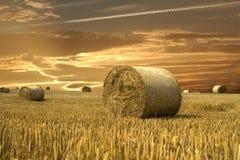 золото поля Стоковое Фото
