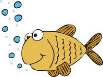 золото рыб Стоковые Фотографии RF