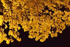золото сделало Стоковая Фотография
