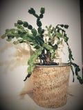золото фольги рождества кактуса ветви смычка висит тесемку стоковые фотографии rf