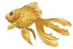 золото цвета стоковые изображения rf