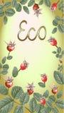 Золото eco Dogrose Стоковое фото RF