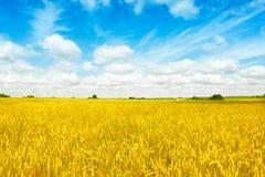 Золото fields панорама пшеницы с голубым небом и облаками, сельской сельской местностью стоковое фото