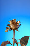 золото flover Стоковое Фото