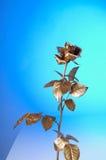 золото flover Стоковая Фотография RF