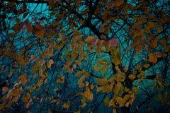 Золотые желтые листья на предпосылке реки стоковая фотография