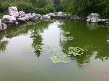 золотые красные рыбы плавают стоковая фотография