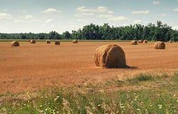 Золотые круглые стога сена в выгоне Стоковое Фото