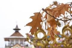 Золотые листья на предпосылке архитектуры стоковое изображение rf