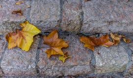 Золотые листья осени на каменных лестницах Стоковые Изображения RF