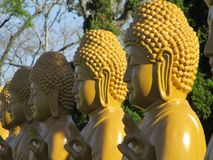 Золотые статуи Будды, висок Бразилии Chen Tien стоковые изображения rf