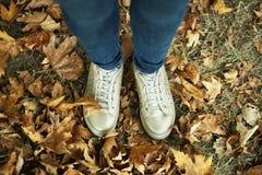 Золотые тапки на фоне желтых листьев Стоковые Изображения RF