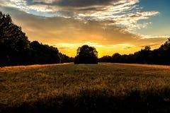Золотые час и поле с зерном стоковое изображение rf