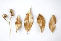 Золотые элементы дизайна лист и плодоовощ Элементы для приглашения, карточки украшения свадьбы, день валентинок, поздравительные  Стоковое Фото