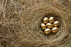 Золотые яичка в предпосылке соломы гнезда стоковые изображения