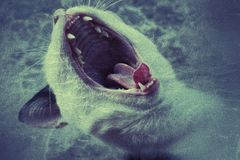Зомби полюбило кот Стоковые Изображения