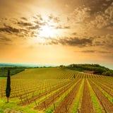 Зона, виноградник, деревья и ферма Chianti на заходе солнца. Тоскана, Ita стоковое фото rf