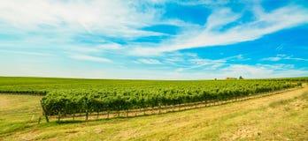 Зона, виноградник и ферма Chianti. Тоскана, Италия стоковое изображение rf