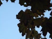 Зона и на солнце winndow стоковое фото rf