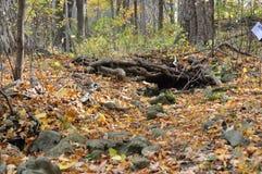 Зона консервации Karst Eramosa - 26-ое октября 2014 Стоковая Фотография