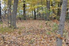 Зона консервации Karst Eramosa - 26-ое октября 2014 Стоковое фото RF