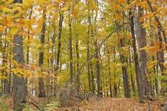 Зона консервации Karst Eramosa - 26-ое октября 2014 Стоковые Фотографии RF