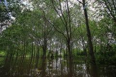 Зона мангровы стоковое фото rf