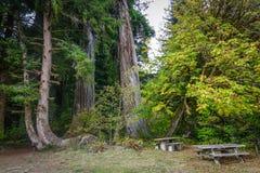 Зона пикника под Redwoods Стоковые Фото