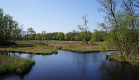Зона природы быка Amsterdamse в Нидерландах Стоковые Фотографии RF